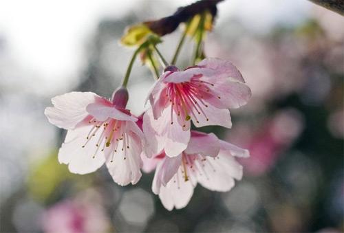 10-pink-flower-bokeh