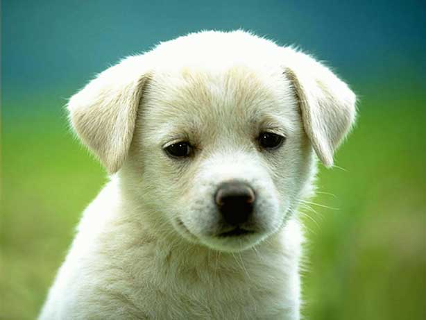 animals-dog